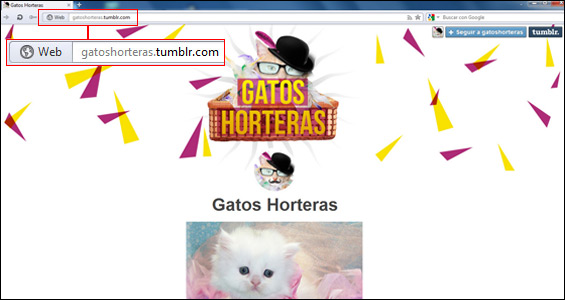 gatos-horteras-tumblr-blog-hostalia-hosting